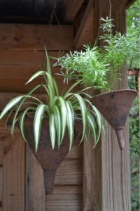 "Funnel ""hanging basket"" planters."